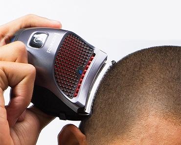 shorthair-370